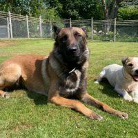 Glada Bäverns Hundpensionat är fullbokat i helgen...