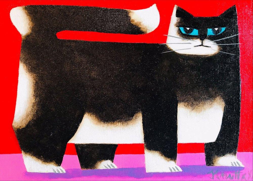 Pats Cat