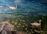 Swans_Small