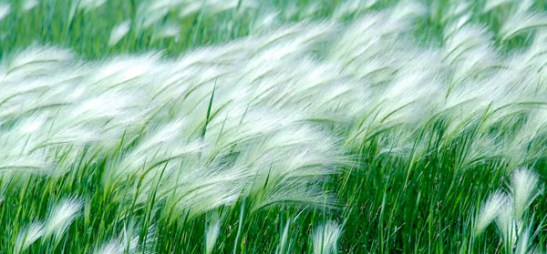 blowing_in_the_wind1