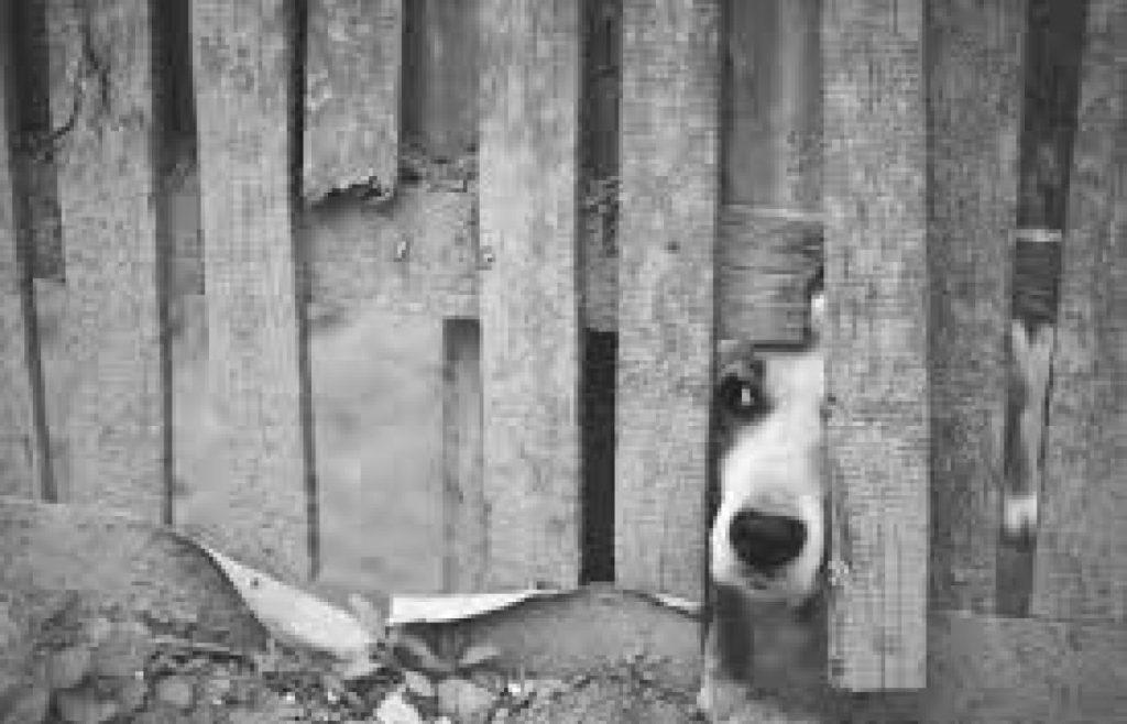cropped-perro-buscando.jpg