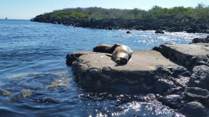 The Sea Lions take over the landing area