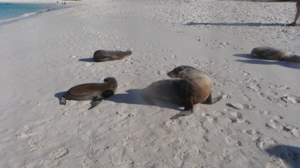 Sea Lions greet us at the beach