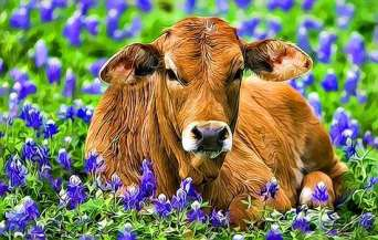 beautiful-cow-1