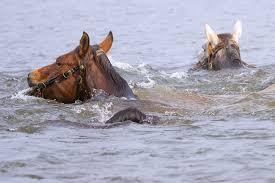 horses stream