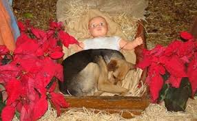 dog in manger.jpeg