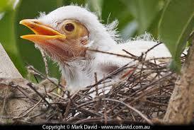 noisy nest