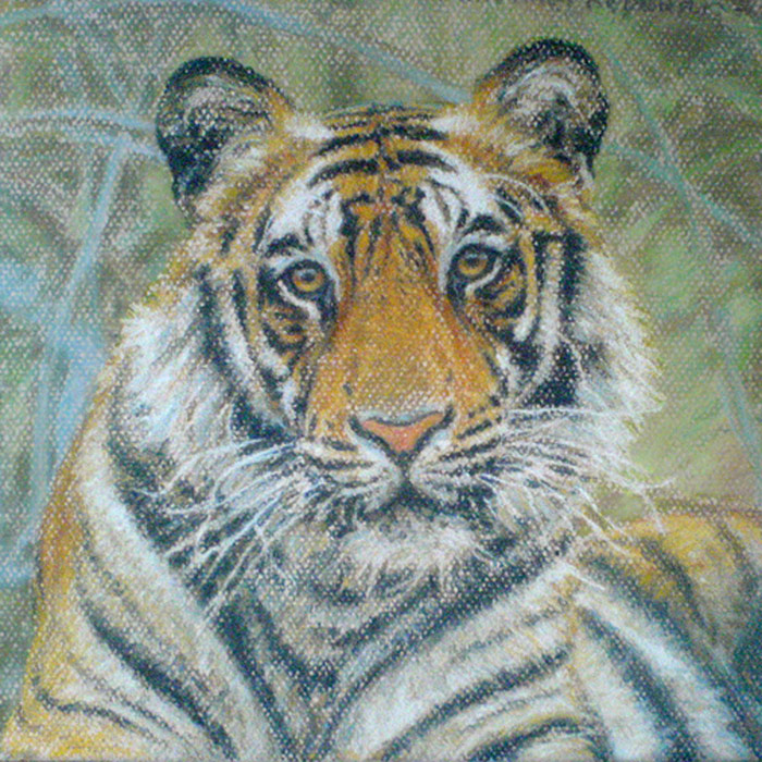 Tiger study (wildlife art)