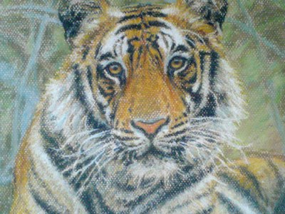 Tiger study (wildlife art)