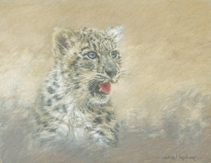 A vignette-style portrait of one the world's most elusive big cats - the snow leopard.