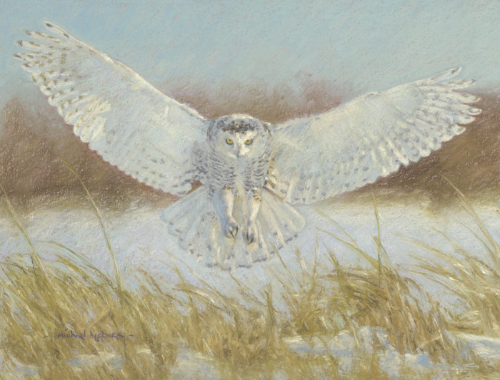 Painting of a Snowy owl silently descending on its prey.