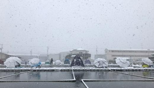 最強寒波の中、茨木新池へ(2017.01.15)