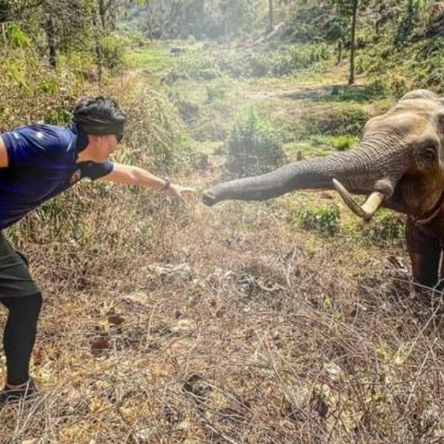 Hermoso y conmovedor! 12 años después elefante reconoce a veterinario que  le salvó la vida y lo saluda: FOTO | El Heraldo de México