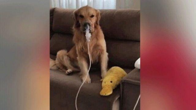 Eso es amor! Tras ser maltratado hasta causarle asma, perrito es adoptado y  ahora recibe tratamiento | El Heraldo de México