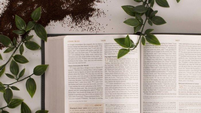 bible translation