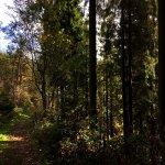 Wald um Monschau