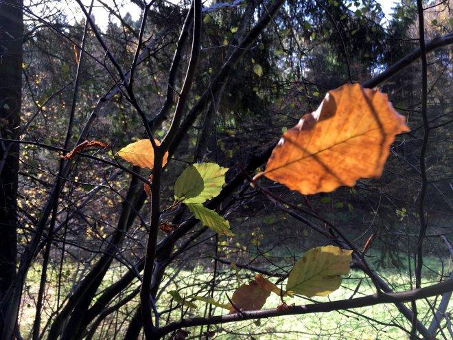 goldenes Blatt im Wald
