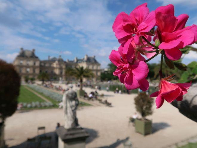 Jardin du Luxembourg mit Geranien