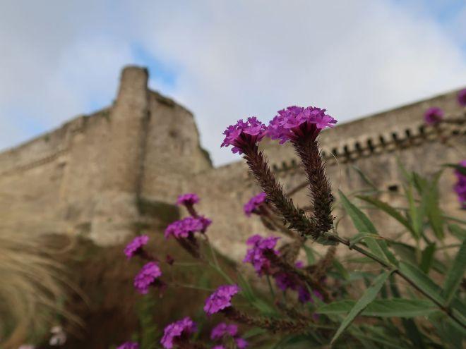 Stadtmauer in Fougeres mit lila Blüten