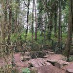 Wald Broceliande Quell der ewigen Jugend