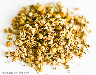 chamomile herb we love for summer