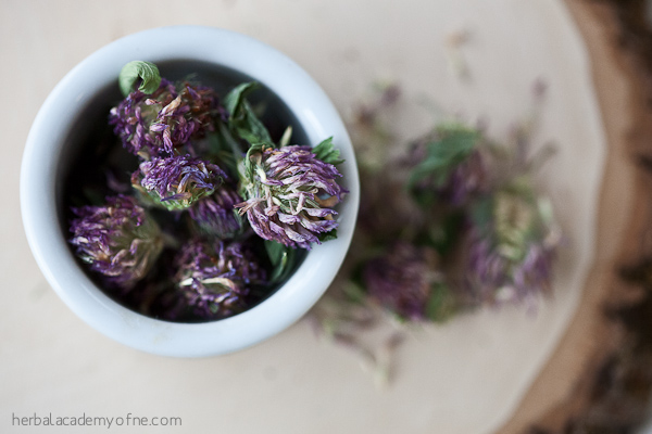Red Clover Red Clover Bring Healing On Over Red Clover Tea Recipe