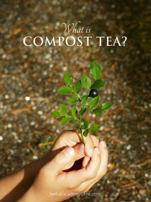 What is Compost Tea - Plants Drink Tea Too