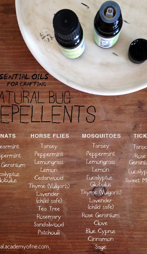 Crafting a Natural Bug Repellent with Essential Oils   Herbal Academy   I have enjoyed crafting my own natural bug repellent for me and my family with essential oils for years and with great results. Recipes included!