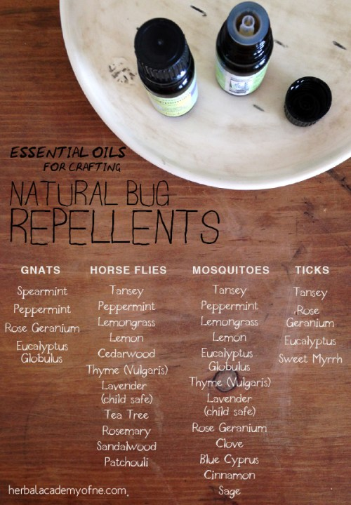 Essential Oils for Crafting a Natural Bug Repellent - Herbal Academy