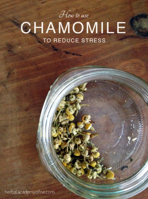 How To Use Chamomile To Reduce Stress - Herbal Academy