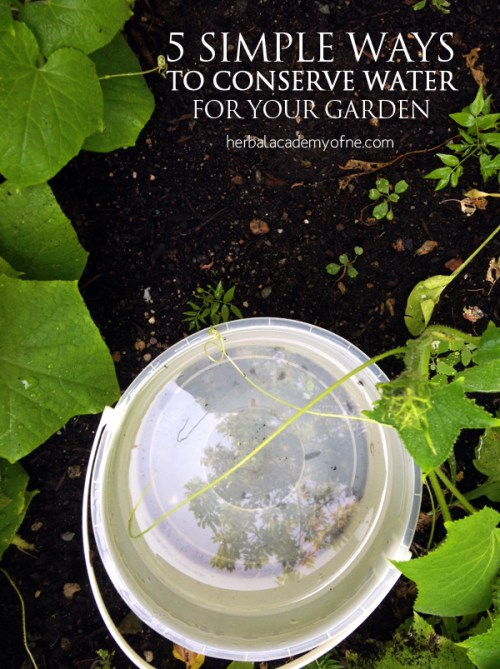 5 simple ways to conserve water for your garden herbal academy - Ways saving water watering garden ...