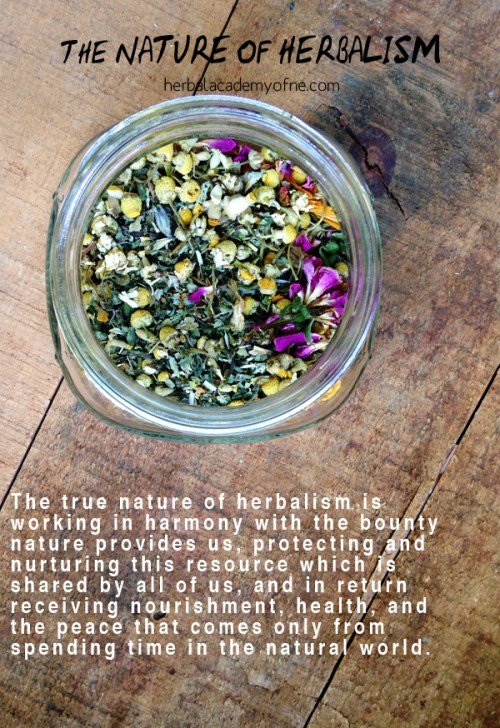 The Nature Of Herbalism - For that is the true nature of herbalism--working in harmony with the bounty nature provides us, protecting and nurturing this resource which is shared by all of us, and in return receiving nourishment, health, and the peace that comes only from spending time in the natural world.