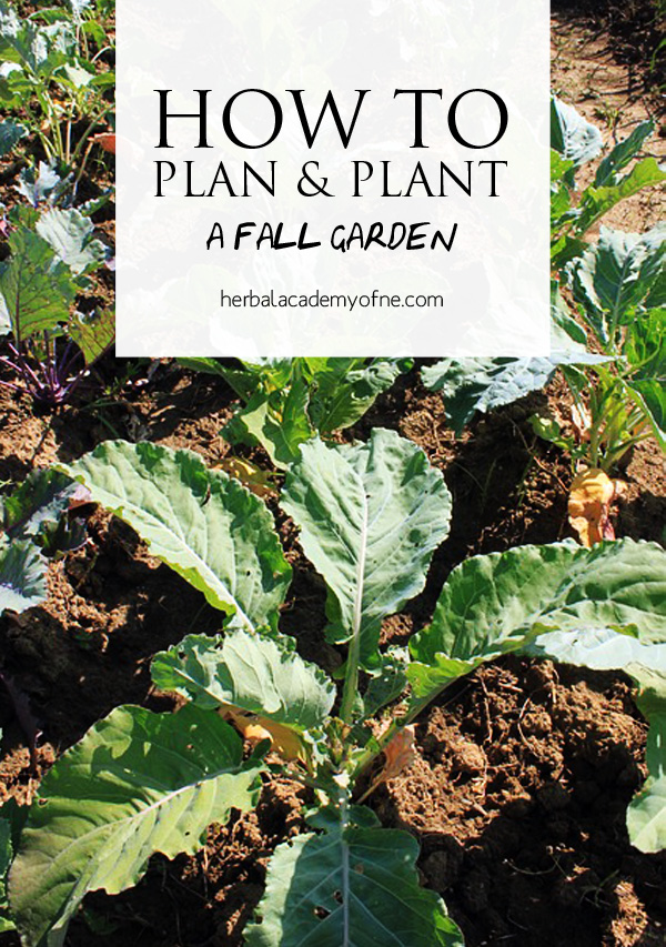 How To Plan And Plant A Fall Garden Herbal Academy Of New England