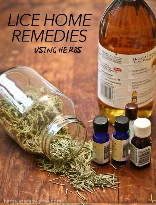 lice home remedies using herbs – herbal academy, Skeleton