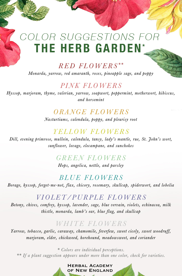 Designing An Herb Garden   Color Suggestions For The Herb Garden