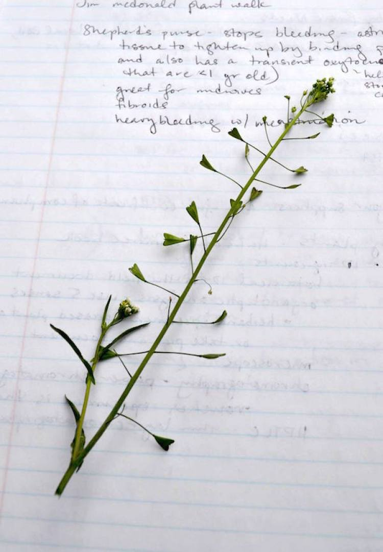 7 Ways to Inspire Your Herbal Studies - Start with One Herb At A Time