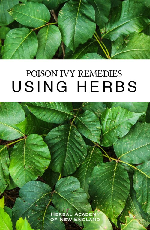 Poison Ivy Remedies Using Herbs