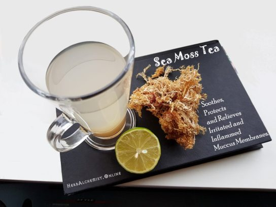 Sea moss gel preparation and use - HerbAlchemist