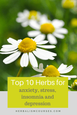 Learn the top herbs for reducing stress, anxiety, insomnia and depression. These effective herbal remedies can be taken as a tea or tincture. #herbs #herbalremedies #naturalremedies #stress #anxiety #insomnia #depression #herbalism