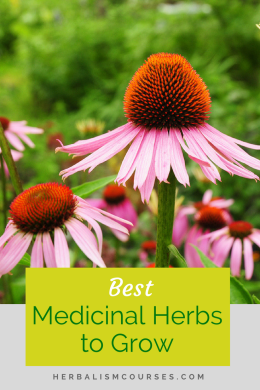 The best medicinal herbs to grow in the garden are easy to grow, safe, beautiful and have many uses. #medicinalherbs #growingherbs #herbsforhealth