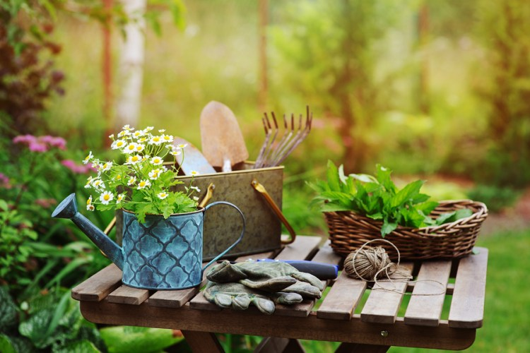 Best medicinal herbs to grow in your garden
