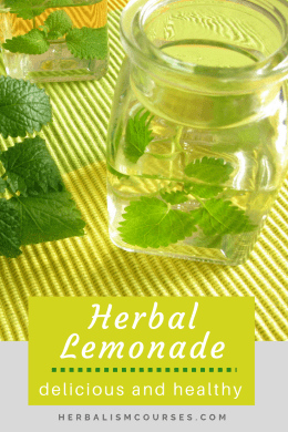 Check out this lemony herbal tea recipe. Enjoy it for the flavor alone, or its many medicinal benefits. The herbs in this herbal lemonade recipe are all very safe and gentle, even for children. #HerbalTea #HerbalTeaRecipe #HomemadeHerbalTea #DIYHerbalTea #HerbalLemonade #Herbalism #HerbalMedicine #HerbalismCourses