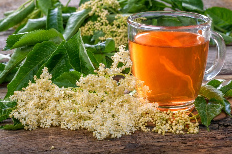 These Wild Medicinal Plants are very common and easy to find. They are also very safe and effective as herbal medicine. #MedicinalPlants #ElderFlower #WildMedicinalFlowers #ElderflowerBenefits #Herbalism #HerbalMedicine #HerbalismCourses #OnlineHerbalCourse