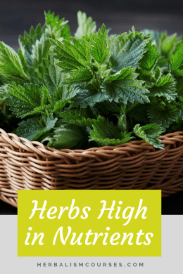 Herbs high in nutrients provide a valuable source of iron, calcium, magnesium, potassium, vitamins and protein. These medicinal plants blur the line between herbalism and food. Learn how to incorporate them into healthy tasty meals. #HerbNutrients #HerbCalcium #HerbIron #PlantProtein #Herbalism #HerbalMedicine #HerbalismCourse #OnlineHerbalCourses
