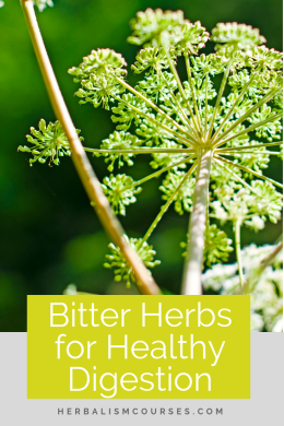 The benefits of bitter herbs are numerous. They are often used in herbalism to promote good digestion. #BitterHerbs #GoodDigestion #GutHealth #DIYBittersRecipes #Herbalism #HerbalMedicine #HerbalismCourses #OnlineHerbalCourse