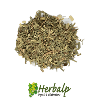 infusions-citronnelle-herbalp