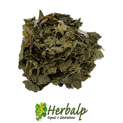 infusion-melisse-herbalp