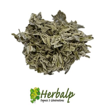 infusion-sauge-herbalp