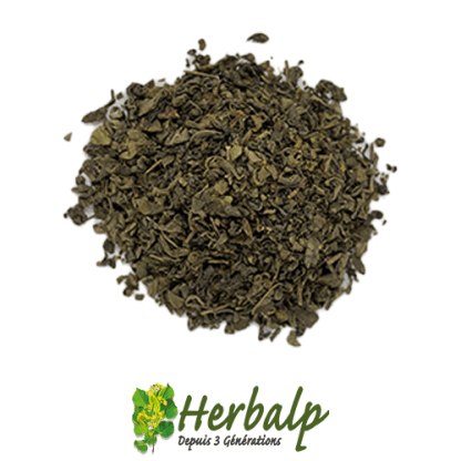 infusion-the-vert-herbalp