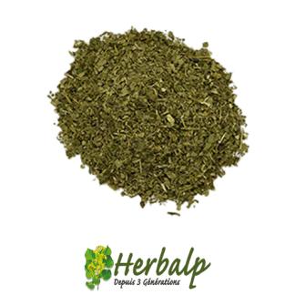 infusion-mate-vert-herbalp